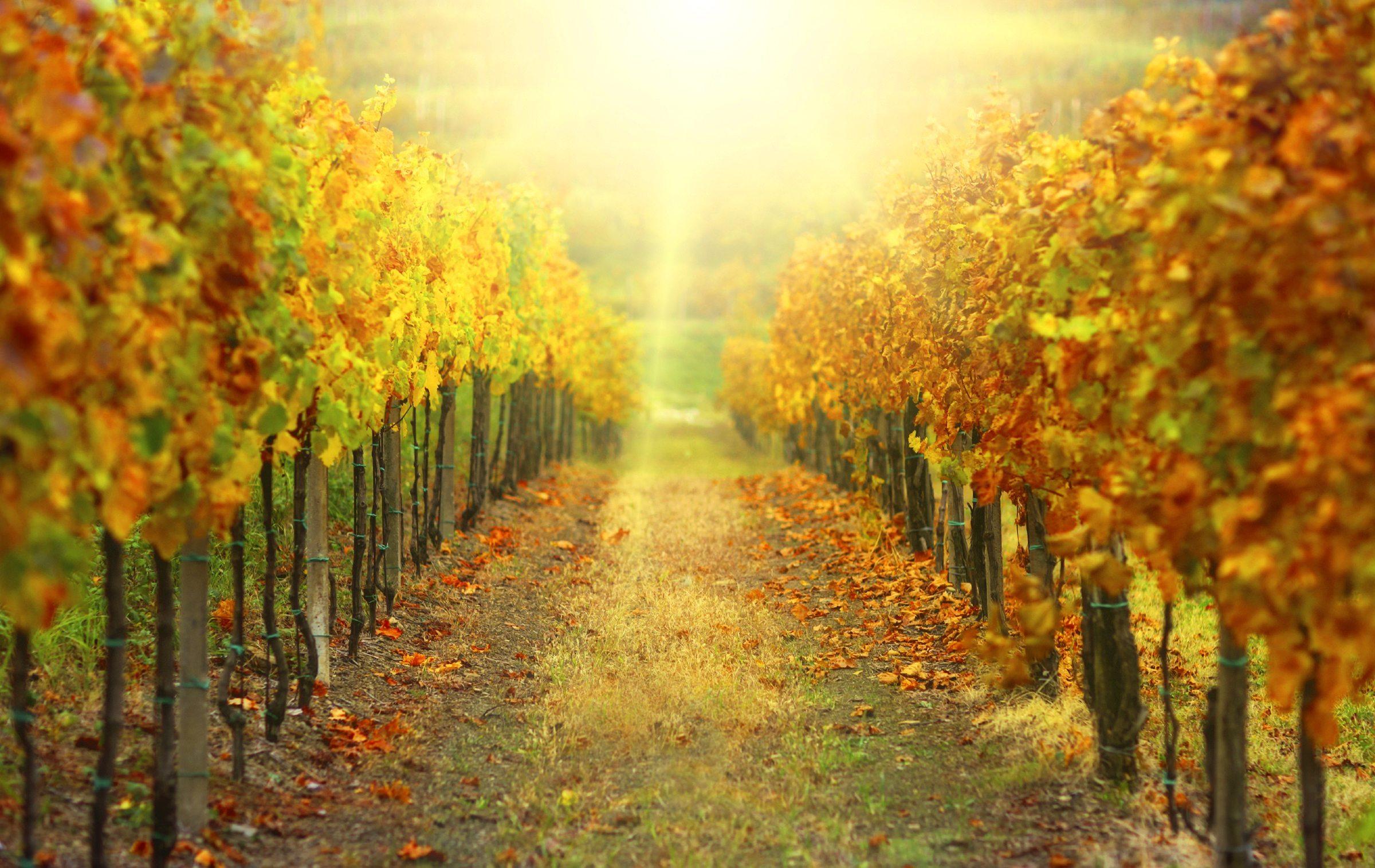 Rượu vang Pháp là gì? Tìm hiểu rượu vang Pháp