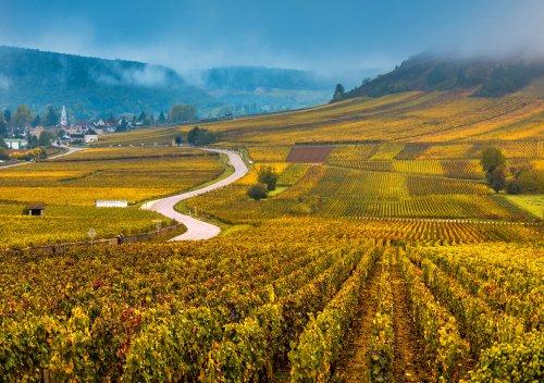Hướng dẫn đơn giản về rượu vang Burgundy