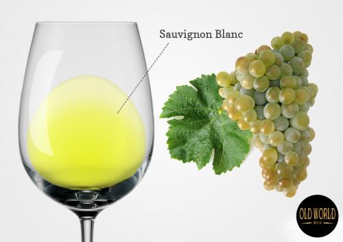 Sauvignon Blanc là gì? Tìm hiểu chi tiết giống nho và rượu vang Sauvignon Blanc