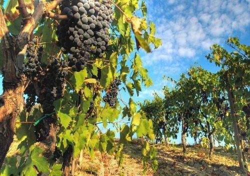 Chianti là gì? Tìm hiểu về rượu vang Chianti