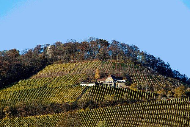Sự khác biệt giữa rượu vang hữu cơ, rượu vang sinh học và rượu vang tự nhiên