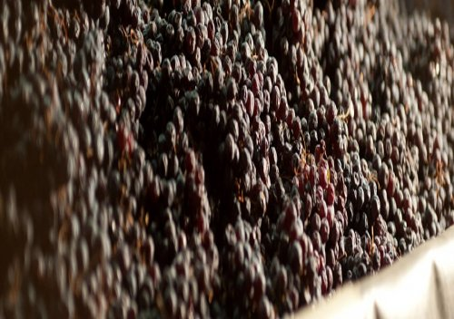 Tìm hiểu phương pháp Appassimento trong rượu vang Ý Old World Cuvee 99